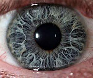 Imaginea unui iris marita la iridoscop